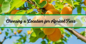 The Best Time To Planting & Grow Apricot Tree Plants