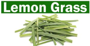 How To Store And Grow Lemon Grass