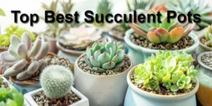 Top Best Succulent Pots-min