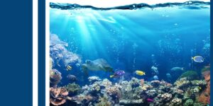 A food source for marine life-min