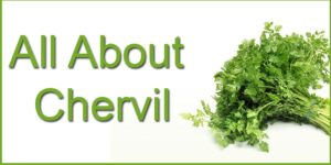 All About Chervil-min