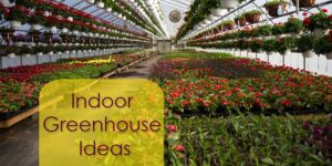 Indoor Greenhouse Ideas-min