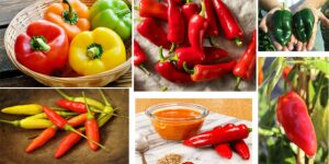 Most Spices of Pepper Plant-min