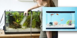 Size of the fish tank-min