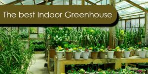 The best Indoor Greenhouse-min