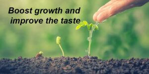 Boost growth and improve the taste-min