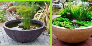 Types Of Container For Water Plants